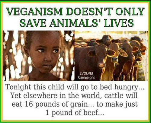 Adopt a Vegan or Vegetarian Diet Veganism Doesn't Only Save Animals Lives