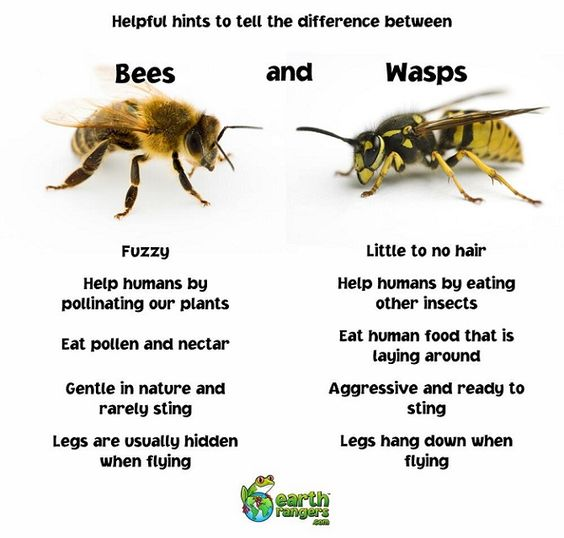 Adopt a Vegan or Vegetarian Diet Bees and Wasps