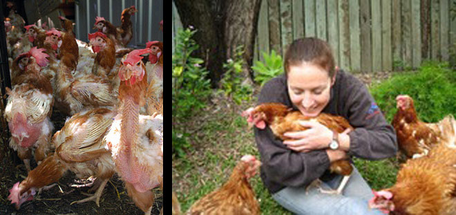 Adopt a Vegan or Vegetarian Diet Cuddly Battery Hens