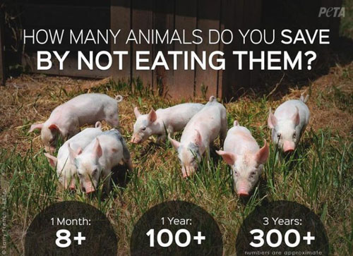 Adopt a Vegan or Vegetarian Diet Saving Animals Statistics