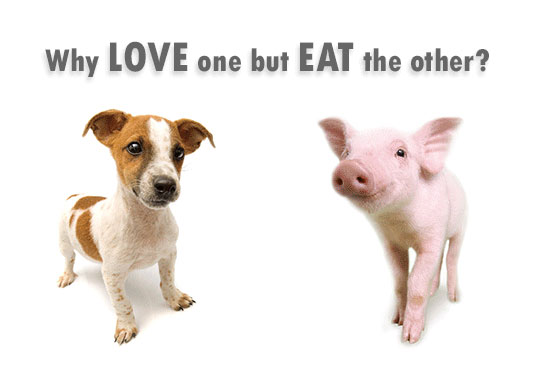Adopt a Vegan or Vegetarian Diet Why Love One?