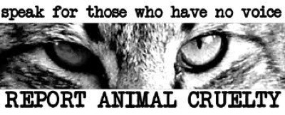 Best Way to Report Online Animal Cruelty Speak For Those Who Have No Voice