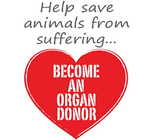 Donate Cells Tissue and Your Body to Help Stop Animal Testing Become an Organ Donor