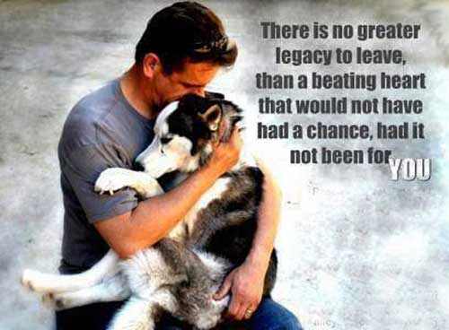Leave a Legacy to Animal Rescues and Charities in Your Will Bequest a Legacy to an Animal Charity