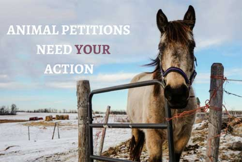 Off and Online Petitions and Campaigns Animal Petitions Need Your Action