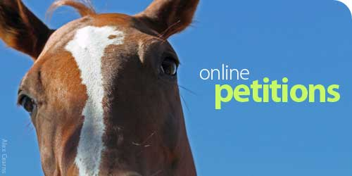 Off and Online Petitions and Campaigns Online Petitions