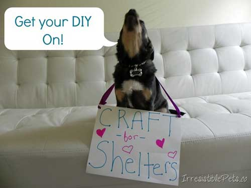 Crafting Ideas to Help Animals Get Your DIY On