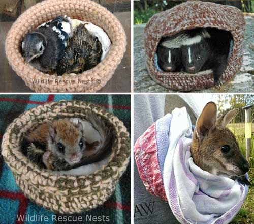 Crafting Ideas to Help Animals Make Life Saving Knitted Rescue Nests and Joey Pouches