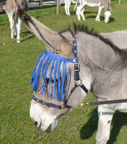 Donkey Fly Mask