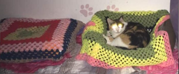 Donate Knitted Blankets To Saving Romanian Strays Charity