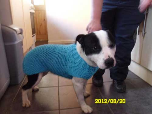 Jumper Knitted For Rescue Dogs