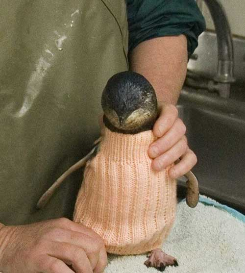 Jumper To Keep Oil Covered Penguins Warm