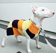 Knitted Jumpers Help Keep MRI Scanned Dogs Warm