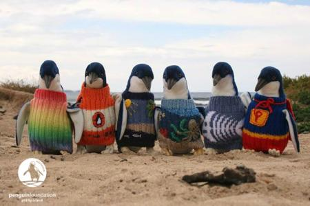 Penguins In Jumpers