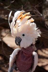 Windy The Parrot Wearing a Jumper