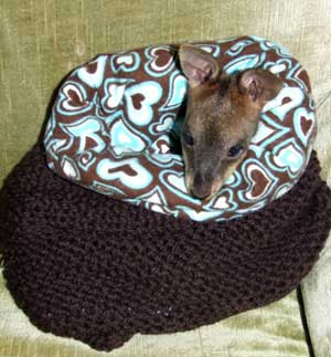 Knitting Ideas to Help Animals Wires Joey Pouch