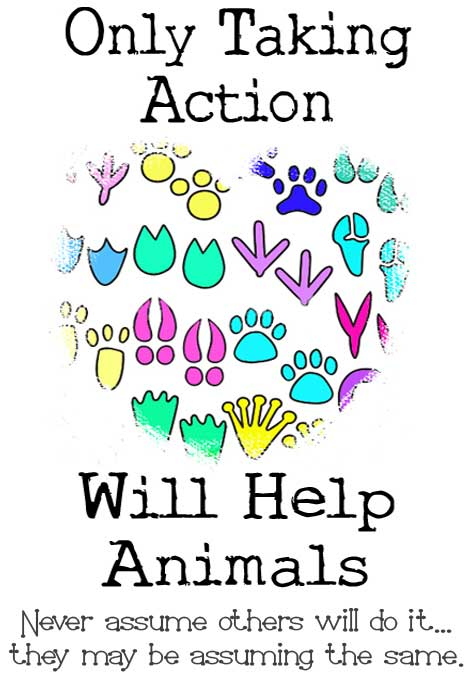 Only Taking Action Will Help Animals