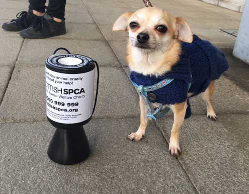 A Scottish SPCA Collection Tin