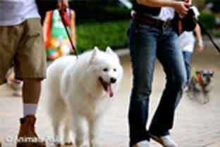 Easy Fundraising Ideas For Charity Sponsored Dog Walks
