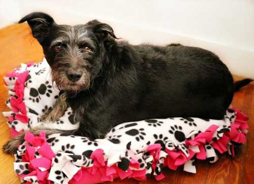 Free Crafting Ideas No Sew Dog or Cat Bed Instructions Image 5 Yogi on His Finished Bed