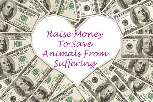 Fundraising Charity Events For Animals Raise Money To Save Animals From Suffering