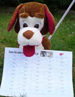 Fundraising For Charity Ideas Stalls Guess The Name Of The Dog Game