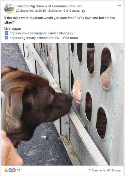 Toronto Pig Save Post