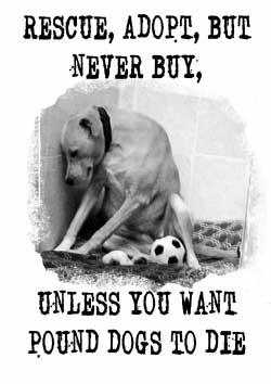 Rescue Adopt But Never Buy Poster