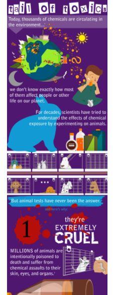 Animal Testing Infograph