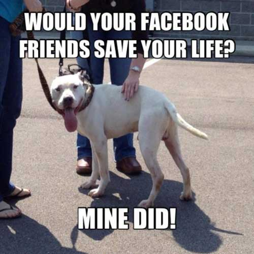 Would Your Facebook Friends Save Your Life