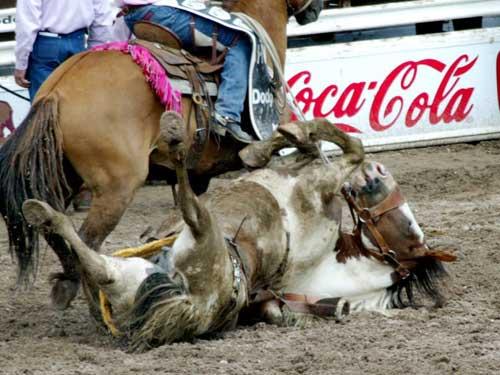 Corporate Sponsors of Animal Cruelty
