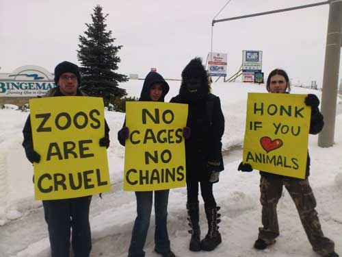 Help Stop Animal Abuse With Protests and Demonstrations Animal Rights Activists