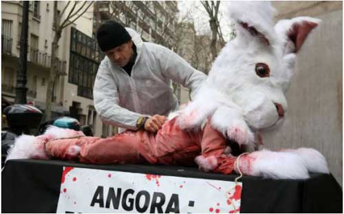 PETA Demonstration of Skinning a Rabbit