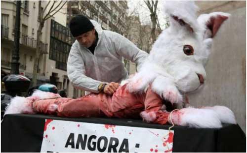PETA Demonstration of Skinning a Rabbit