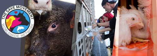 Help Stop Animal Abuse With Protests and Demonstrations The Save Movement Against Slaughterhouses