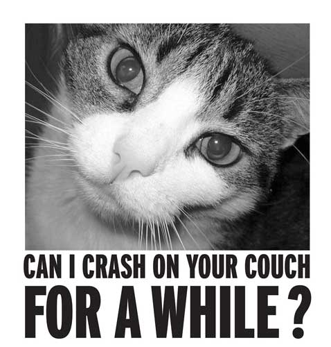 Pet Fostering And Sponsoring Can I Crash On Your Couch For A While ?