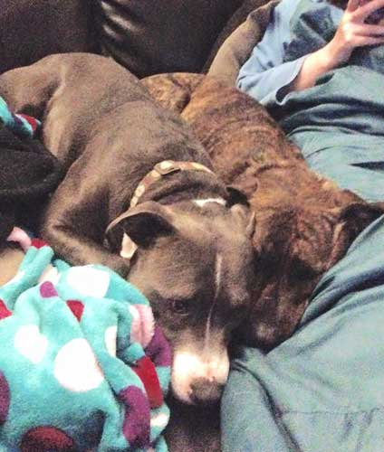 Pet Fostering And Sponsoring Foster Dogs Monty And Sammie