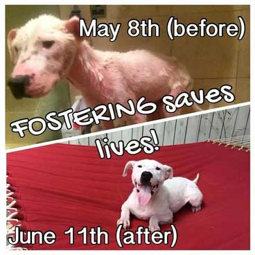 Fostering Saves Lives Evidence