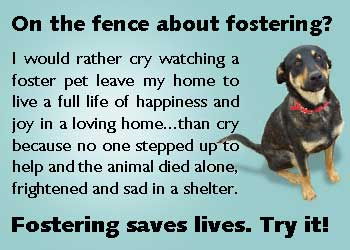 Fostering Saves Lives Try It