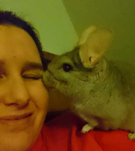 Pet Fostering And Sponsoring Helen With Her Adopted Chinchilla