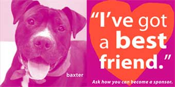 Pet Fostering And Sponsoring I've Got A Best Friend