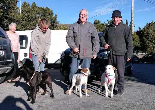 Volunteers For Animals In Distress