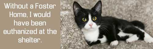 Pet Fostering And Sponsoring Without A Foster Home I Would Have Been Euthanised At The Shelter