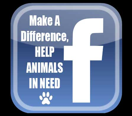 Run A Facebook Charity Fundraising Group Or Page Make A Difference Help Animals In Need
