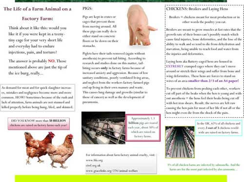 Stop Cruelty To Animals Farm Factory Animal Cruelty Leaflet Back