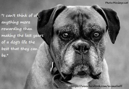 Give An Older Dog A Home