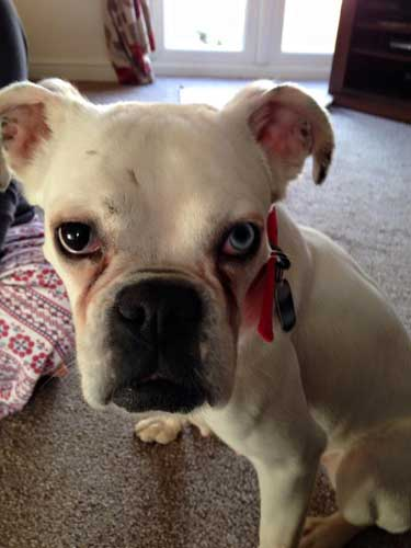 Stop Cruelty To Animals Marianne's Adopted Dog Casey