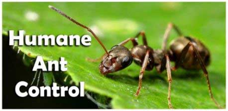 Prevent Suffering By Using Humane Pest Control