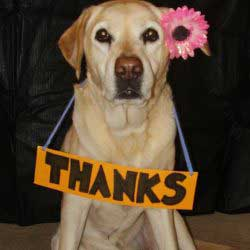 Stop Cruelty To Animals Thank You For Helping Animals In Need