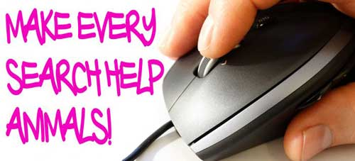 Use A Charity Search Engine Make Every Search Help Animals